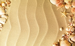 TEXTURE, Texture, SEASHELLS, sand, background, Design backgrounds