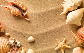 STRUTTURA, Consistenza, SEASHELLS, sabbia, sfondo, Progettazione sfondi