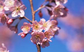 フラワーズ, 花, 開花, SPRING, COLOR, 木, 低木