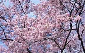 Flowers, flower, flowering, SPRING, COLOR, trees, SHRUBS