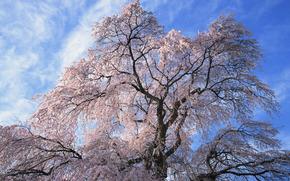 sky, tree, Flowers
