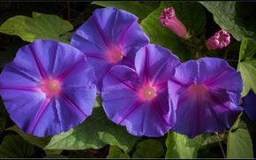 цветы, листья, флора