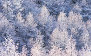winter, nature, trees, snow, forest
