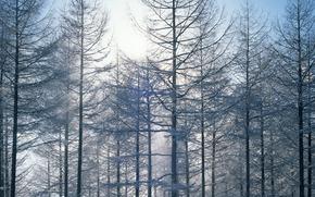зима, природа, деревья, снег, небо