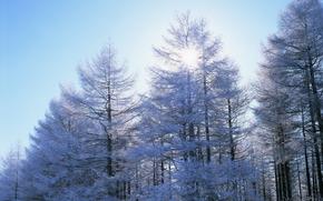 зима, природа, деревья, снег, небо, солнце