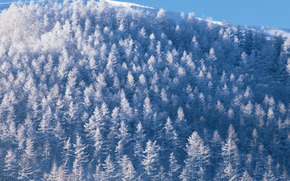 winter, nature, trees, snow, sky, forest, Mountains