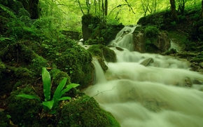 forest, trees, Rocks, waterfall, nature