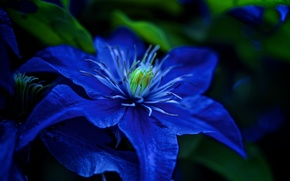 fiore, flora, Macro