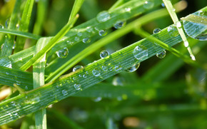 grass, dew, drops, Macro