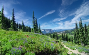 Mount Rainier National Park, Mountains, Hills, trees, landscape