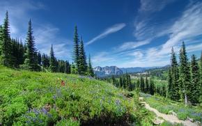 Parque Nacional Monte Rainier, Montañas, Hills, árboles, paisaje