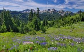 Mount Rainier National Park, Montagne, alberi, paesaggio