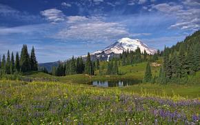 Parque Nacional Monte Rainier, Montañas, lago, árboles, paisaje