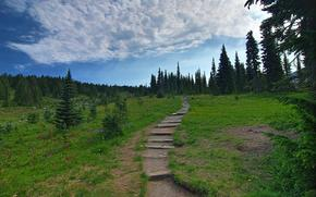 Mount Rainier National Park, горы, холмы, деревья, пейзаж