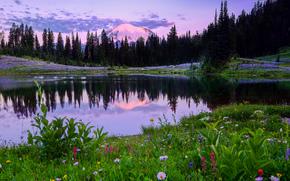 Mount Rainier National Park, Lago Tipsoo, campo, Fiori, alberi, paesaggio