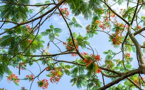 alberi, FILIALE, fogliame, Fiori, cielo