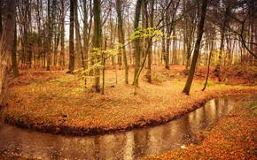 лес, деревья, осень, река, природа