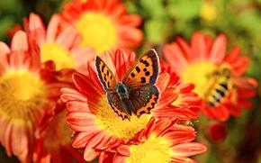 Flowers, butterfly, Macro