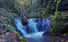 Wald, Bäume, Wasserfall, Fluss, Natur
