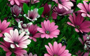 arriate, Flores, flora