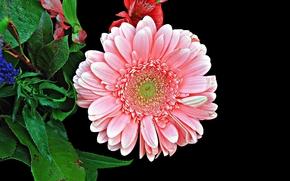 flower, plant, flora