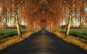 autunno, campo, stradale, alberi, paesaggio