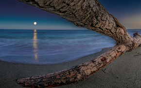 море, коряга, дерево, небо, вечер, берег