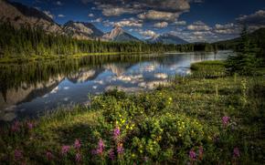 Mountains, Fluss, Bäume, Ufer, Blumen, Landschaft