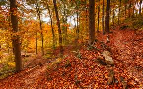 automne, forêt, arbres, paysage