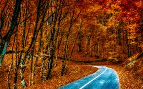 秋, 道路, 树, 景观