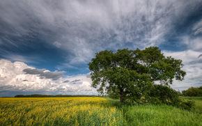 field, tree, landscape