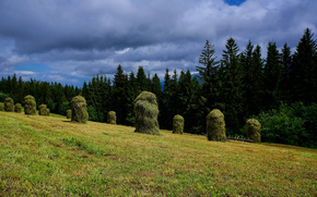 field, forest, hay, shock, trees, landscape