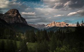 горы, лес, ели, облака