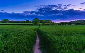 pole, chodnik, drzew, krajobraz
