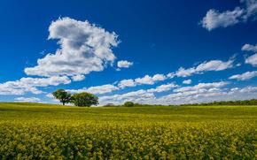 pole, Kwiaty, drzew, krajobraz