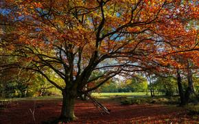autunno, albero, paesaggio