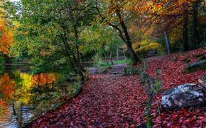 autunno, parco, alberi, paesaggio