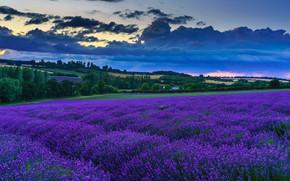 Darenth, Kent, Inglaterra, campo, Flores, puesta del sol, paisaje