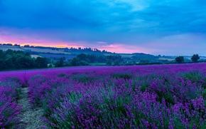 Darenth, Kent, England, поле, цветы, закат, пейзаж