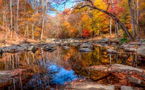automne, forêt, étang, arbres, paysage