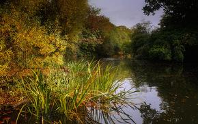 lago, bosque, árboles, paisaje