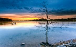 tramonto, albero, lago, paesaggio
