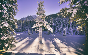 winter, Mountains, trees, landscape