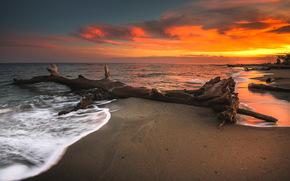 sea, snag, sky, shore, waves, sunset