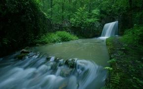 forêt, arbres, rivière, cascade, paysage