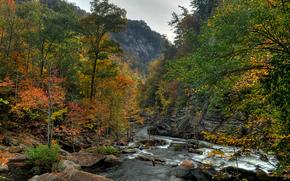 foresta, autunno, fiume, alberi, paesaggio