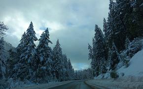 inverno, stradale, foresta, alberi, paesaggio