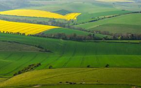 поля, весна, вид с верху, пейзаж