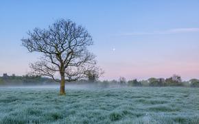 pole, drzewo, mgła, mróz, krajobraz