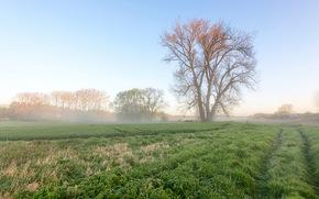 field, tree, fog